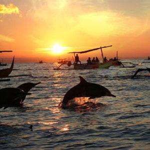 lovina dolphin golf
