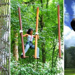 treetop bali indonesia