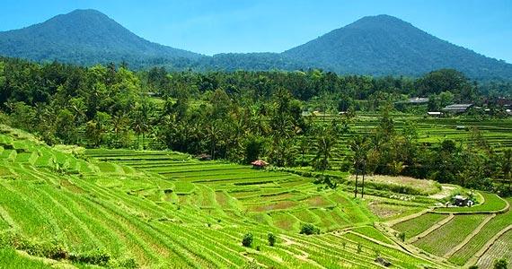 Jatiluwih Rice Terrace - Near by Bedugul
